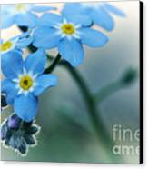 Forget Me Not Canvas Print by Simona Ghidini