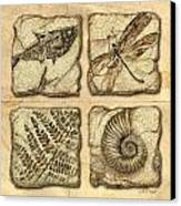 Fossils Canvas Print