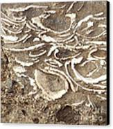 Fossils Layered In Sand And Rock Canvas Print by Artist and Photographer Laura Wrede