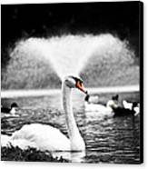 Fountain Swan Canvas Print by Shane Holsclaw