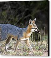 Fox On The Move Canvas Print by Dana Moyer