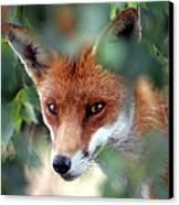 Fox Through Trees Canvas Print by Tim Gainey