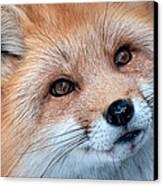 Foxy Lady Canvas Print by Bianca Nadeau