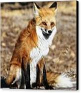 Foxy Canvas Print by Shane Bechler