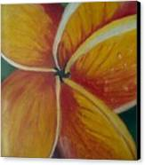 Frangipani Bloom Canvas Print