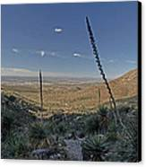 Franklin Mountains Landscape 4 Canvas Print