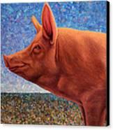 Free Range Pig Canvas Print by James W Johnson