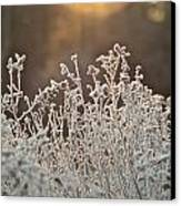 Freezing Cold Canvas Print by Karen Grist