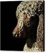 French Poodle Standard Canvas Print by Diana Angstadt