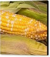 Fresh Corn At Farmers Market Canvas Print by Teri Virbickis