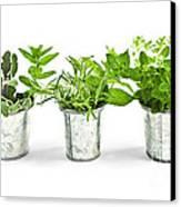 Fresh Herbs In Pots Canvas Print by Elena Elisseeva