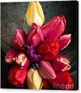 Fresh Spring Tulips Still Life Canvas Print