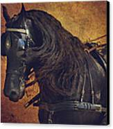 Friesian Under Harness Canvas Print by Lyndsey Warren