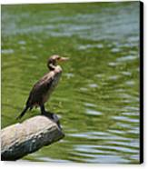 Frigate Bird Watching Estuary Canvas Print by Christine Till