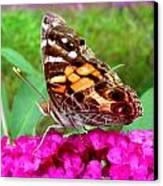 Fritillary Butterfly  Canvas Print by Kim Galluzzo Wozniak