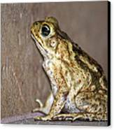 Frog-facing The Wall Canvas Print by Miguel Hernandez