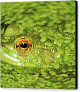 Frog In Single Celled Algae Canvas Print by Optical Playground By MP Ray