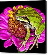 Frog  On Flower Canvas Print by Jean Noren