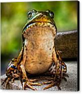 Frog Prince Or So He Thinks Canvas Print by Bob Orsillo