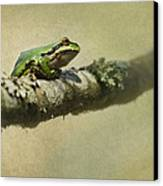 Frog Up A Tree Canvas Print by Angie Vogel