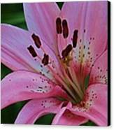 From My Flower Garden Canvas Print by Victoria Sheldon