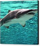 From The Deep II Canvas Print by Suzanne Gaff