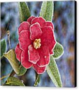 Frosty Camellia - Phone Case Design Canvas Print by Gregory Scott