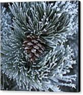 Frosty Fort Collins Morning Canvas Print by Michael Gourley