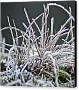 Frosty Grass Canvas Print by Karen Grist