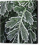Frosty Leaves Macro Canvas Print by Elena Elisseeva