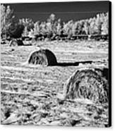 frozen snow covered hay bales in a field Forget Saskatchewan Canada Canvas Print