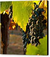 Fruit Of The Vine Canvas Print by Bill Gallagher