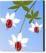 Fuchsia Canvas Print