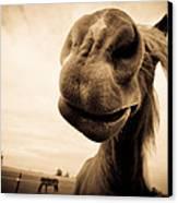 Funny Horse Sepia Canvas Print by Paulina Szajek
