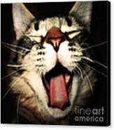 Maine Coon Cat Original Tongue Out Cute Kitty Portrait Funny Cool Animal Making Faces New Pet Gifts Canvas Print by Marie Christine Belkadi