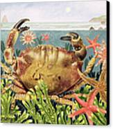 Furrowed Crab With Starfish Underwater Canvas Print by EB Watts