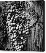 Future Wine Canvas Print
