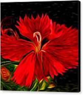 Galactic Dianthus Canvas Print