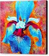 Garden Fiesta Canvas Print by Moon Stumpp