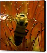 Gathering Nectar Canvas Print