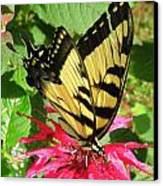Gathering Nectar Canvas Print by Kim Galluzzo Wozniak