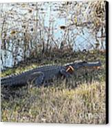 Gator Football Canvas Print by Al Powell Photography USA