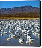 Geese At Bosque Del Apache Canvas Print by Kurt Van Wagner
