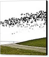 Geese Canvas Print by Frits Selier