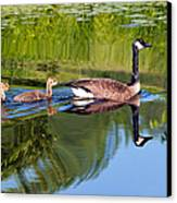 Geese Ripples Canvas Print by Shell Ette