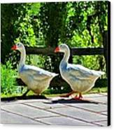 Geese Strolling In The Garden Canvas Print by Tracie Kaska