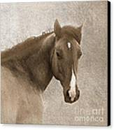 Gentle Devotion Canvas Print
