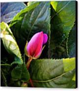 Geranium Bud Canvas Print