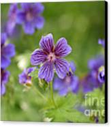 Geranium Himalayense Canvas Print
