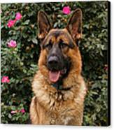 German Shepherd Dog Canvas Print by Sandy Keeton